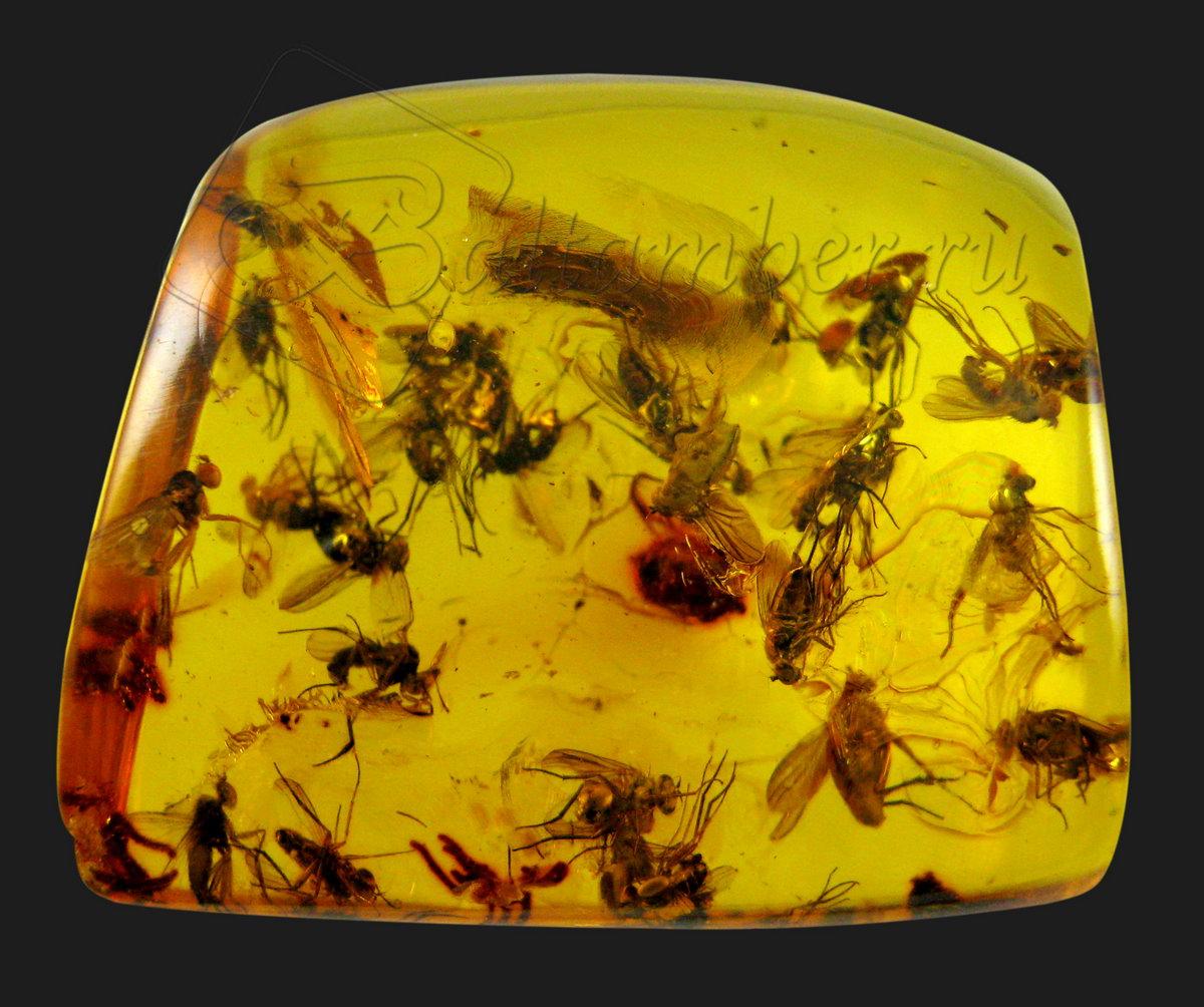 насекомые в янтаре: